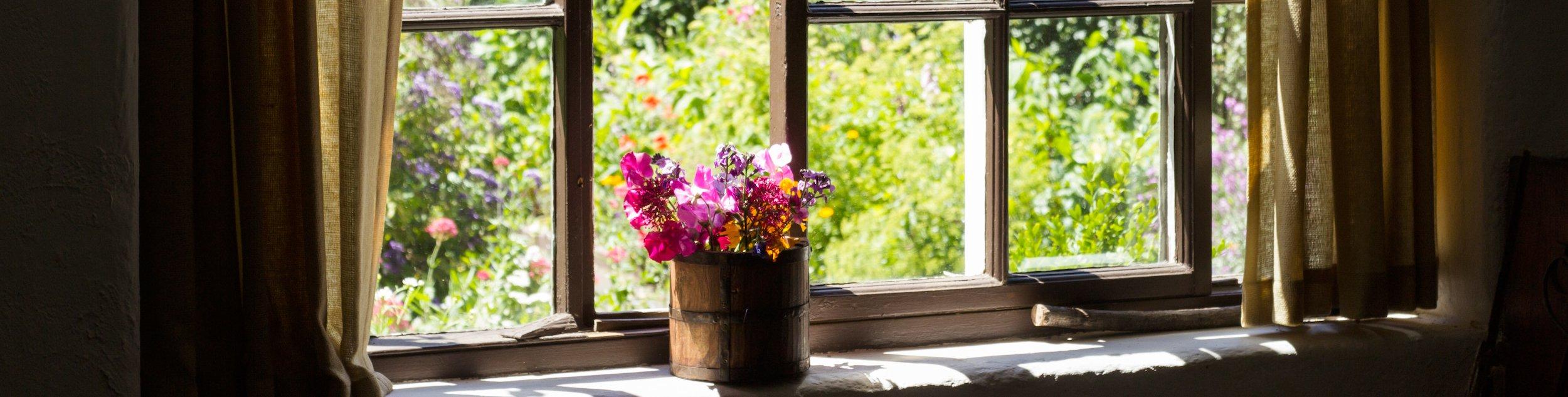 Garden through window
